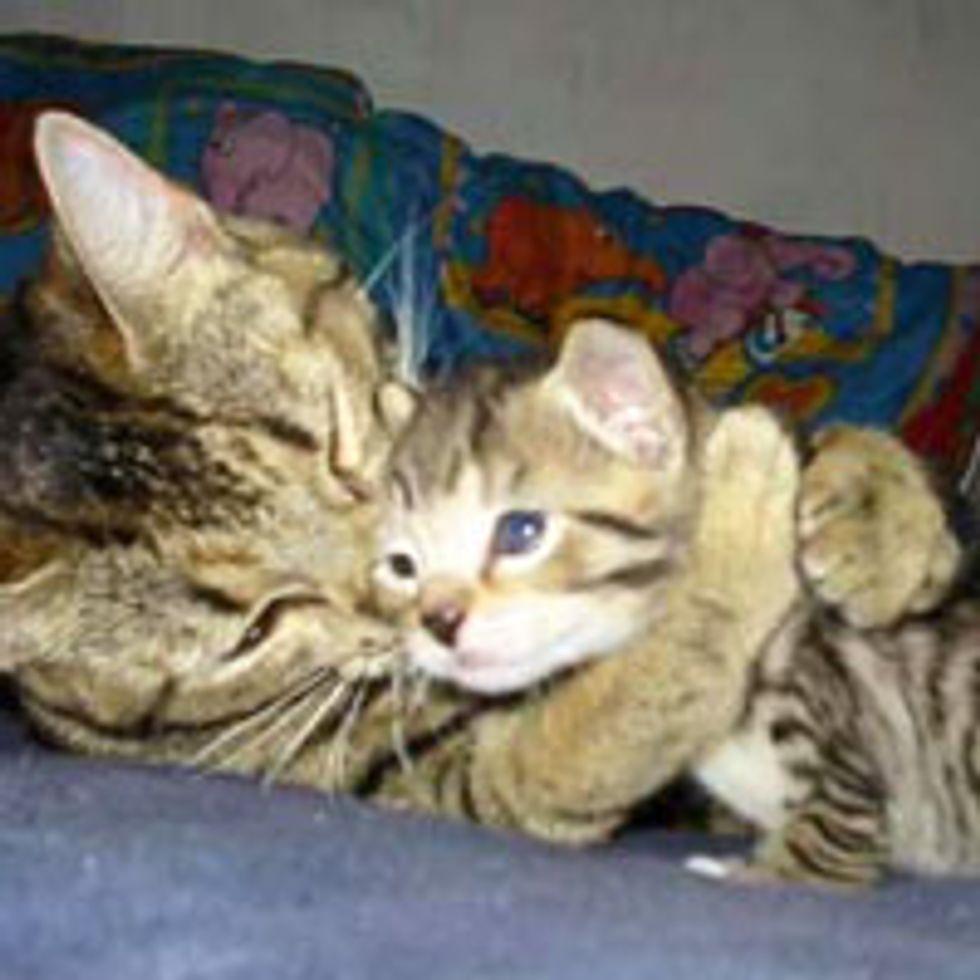 Mama's Hugs