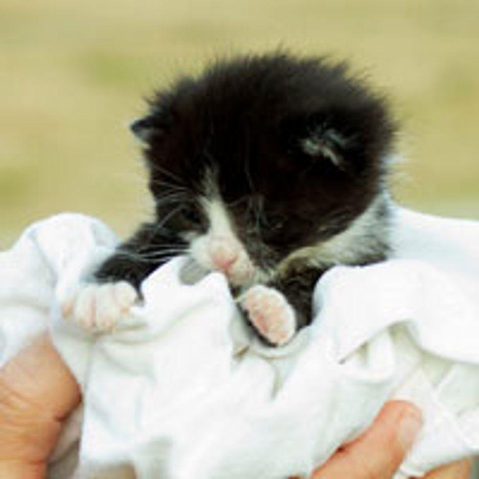 Teeny Tuxedo Bundle of Cute