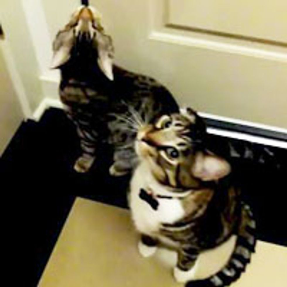 Oskar the Blind cat Takes Daily Walk with His Best Furiend