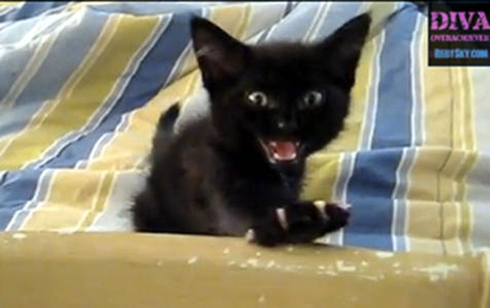 Kitty Squack