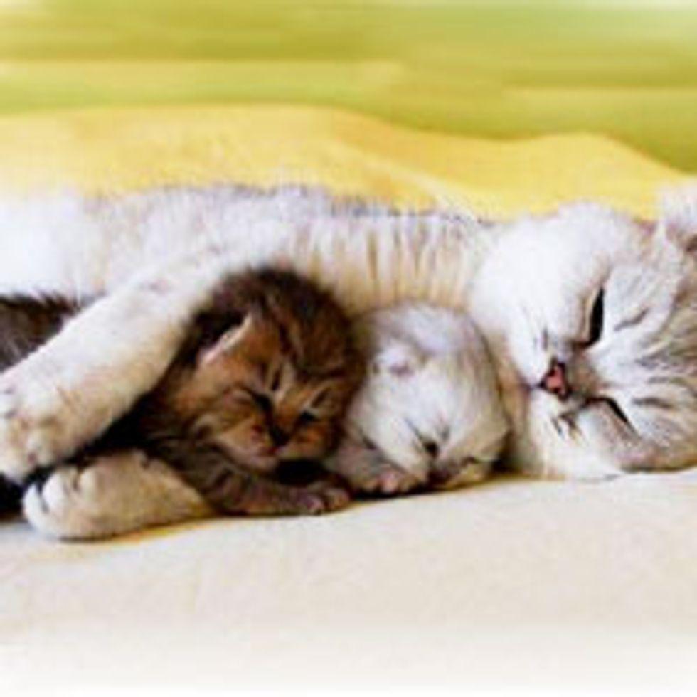 Double the Hug, Double the Love