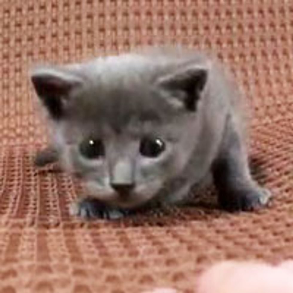 Kitty Ready to Attack with Cuteness