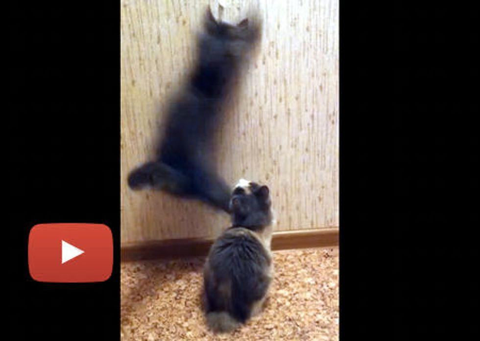 Kitties Fixing Wallpaper