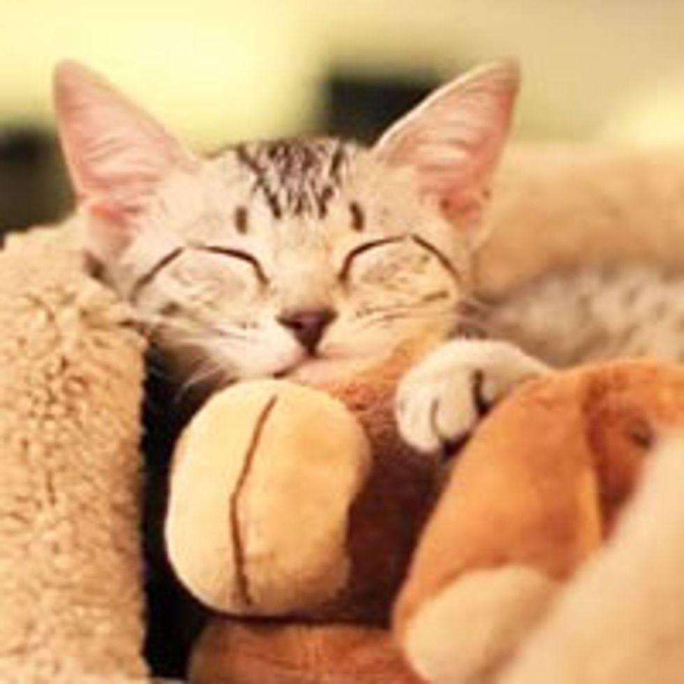 Nylah the Kitty Sleeps Everywhere