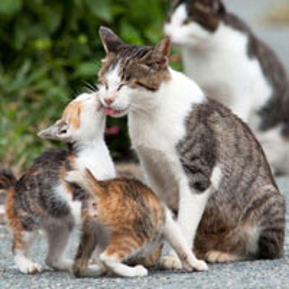 Island Cats from Fukuoka Japan