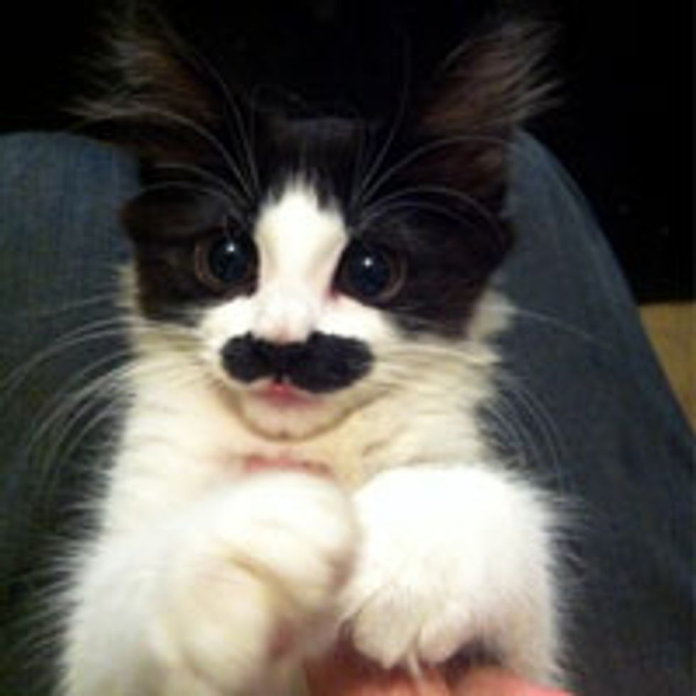 I Mustache You a Question...