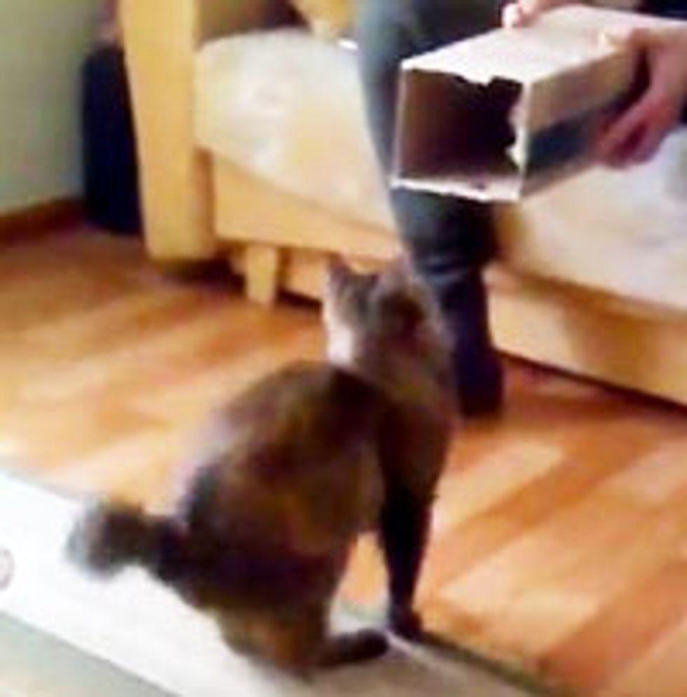 Self-packing Cat