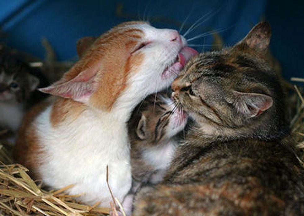 The Babysitter Feral Cat Specter