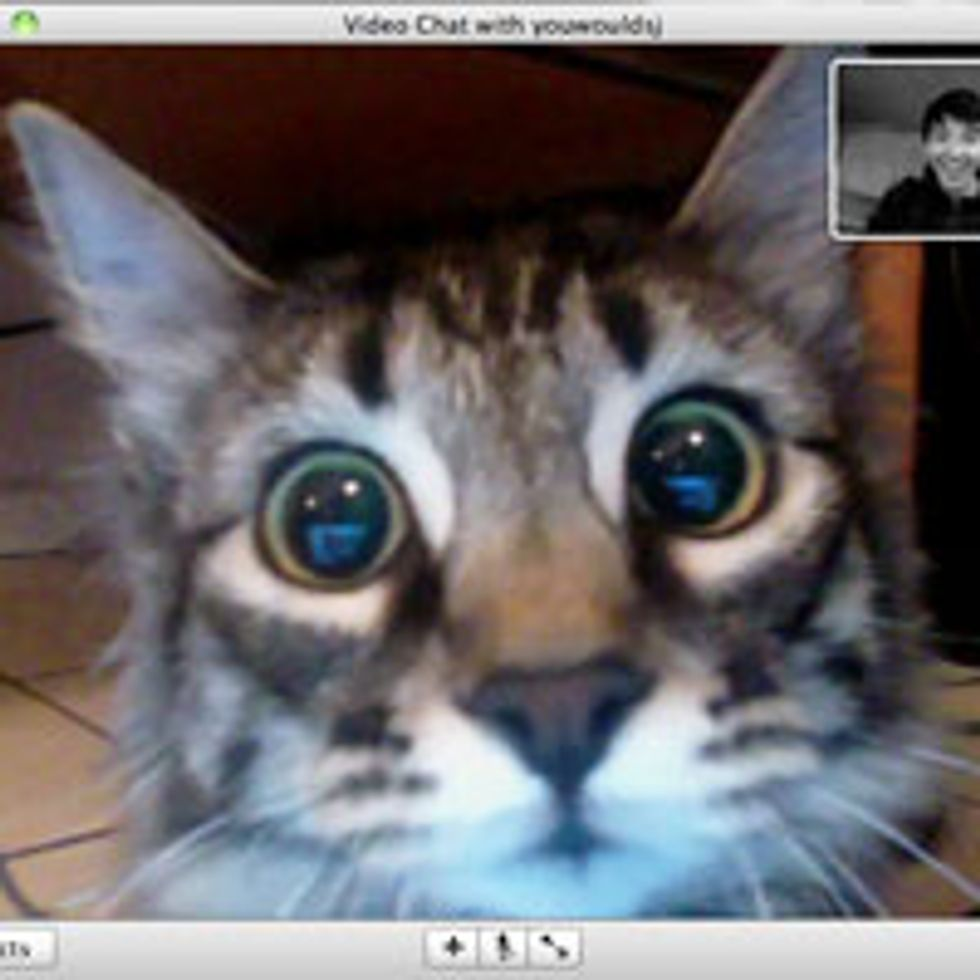 Kitty Sees Dad on Webcam First Time