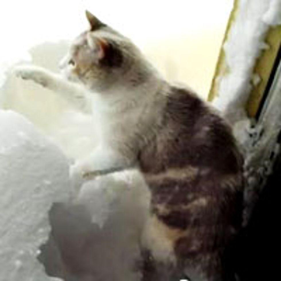 Kitty Shoveling Snow