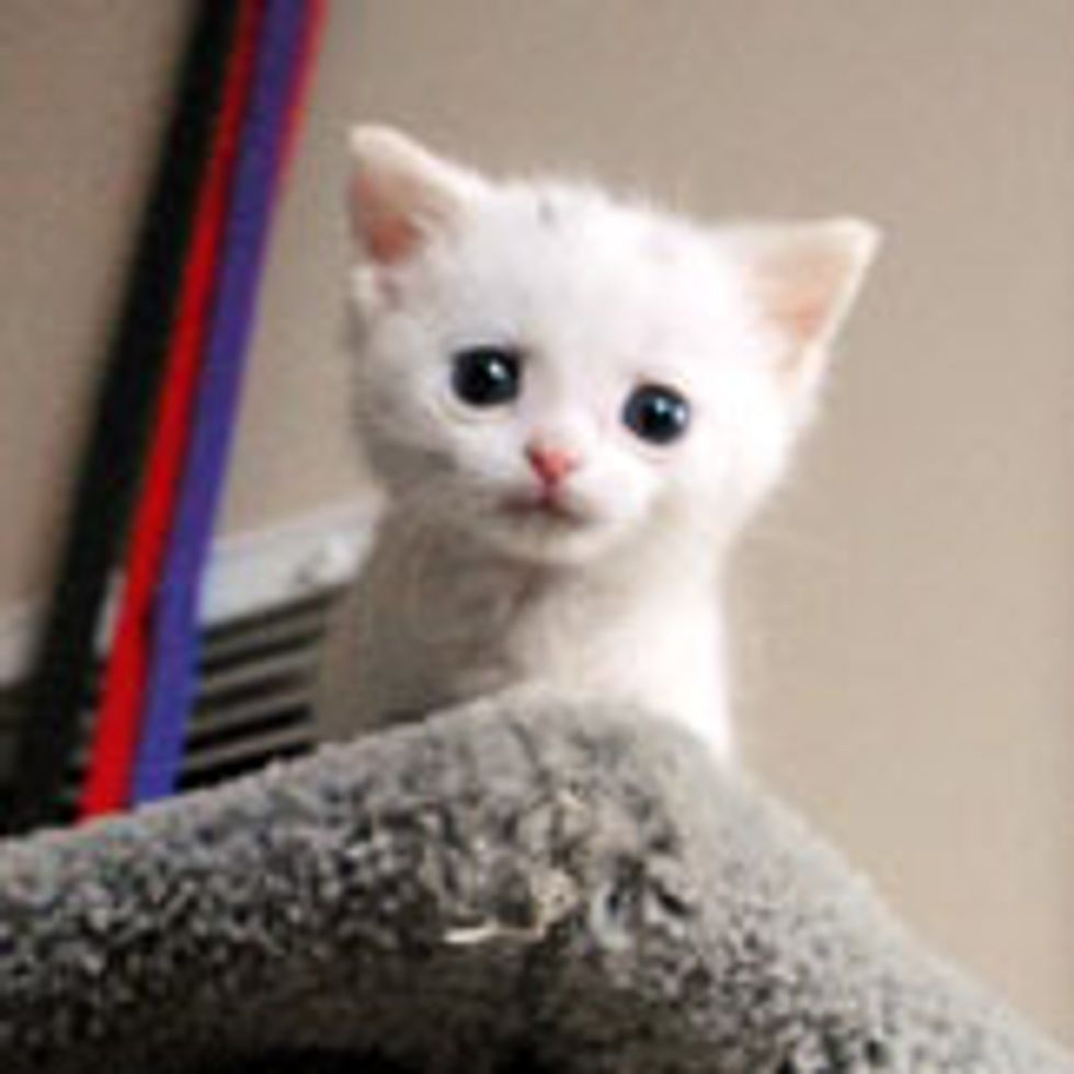 Tiny Bitty Nugget