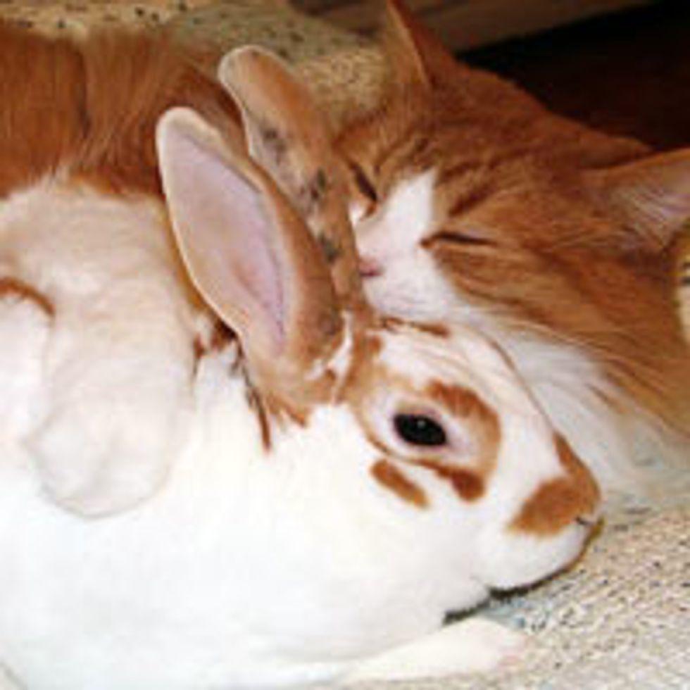 Mimi the Cat Loves Bunnies