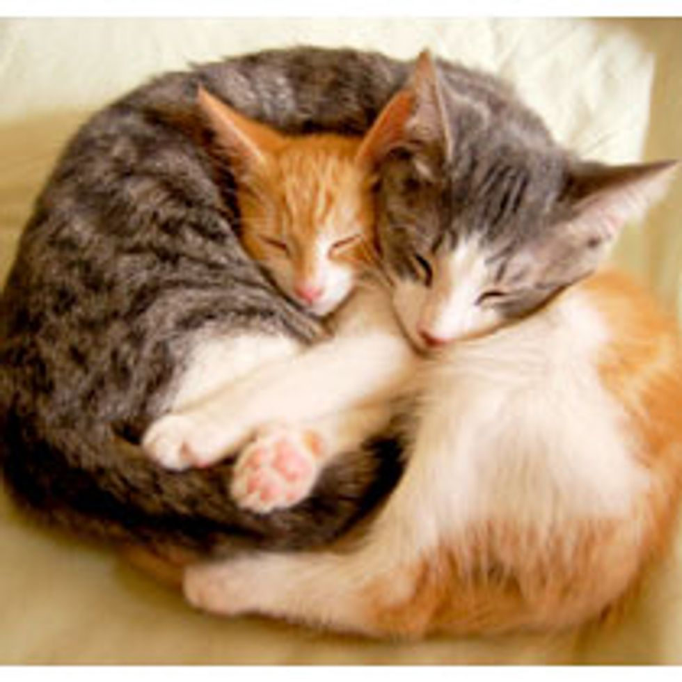 We are Pillows for Each Other