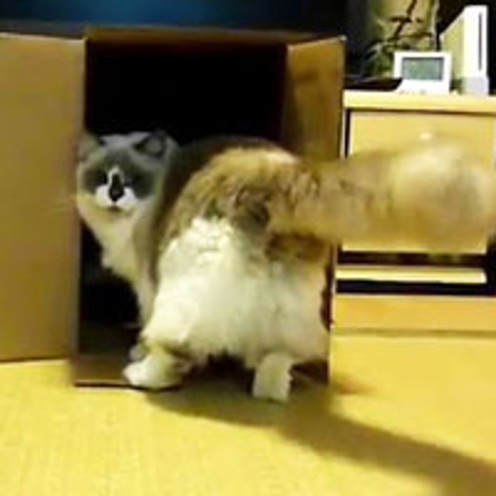 Don't Enter My Box!