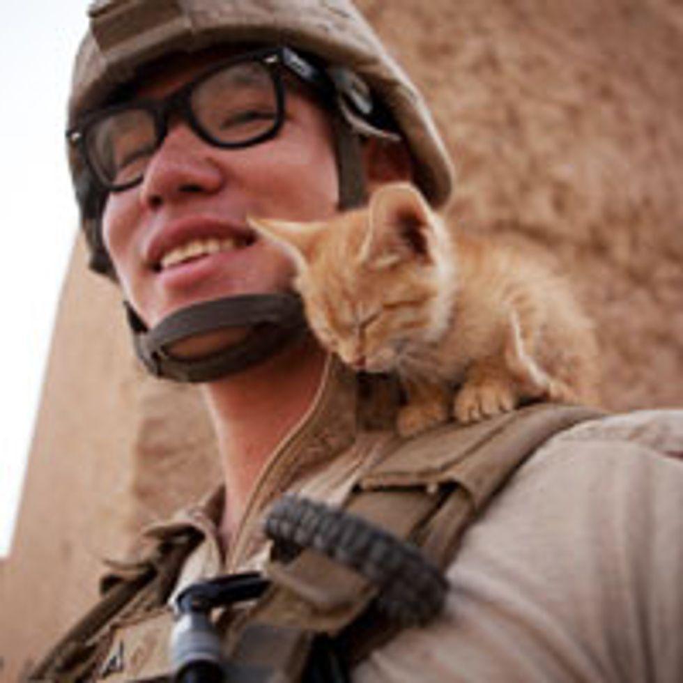 Tiny Afghan Kitten Dozes off on Shoulder