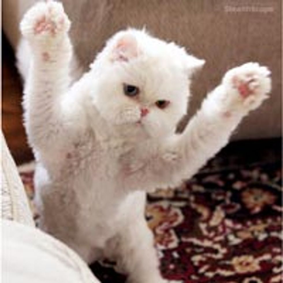 Rawr! Attack of the Cute and Fluffy