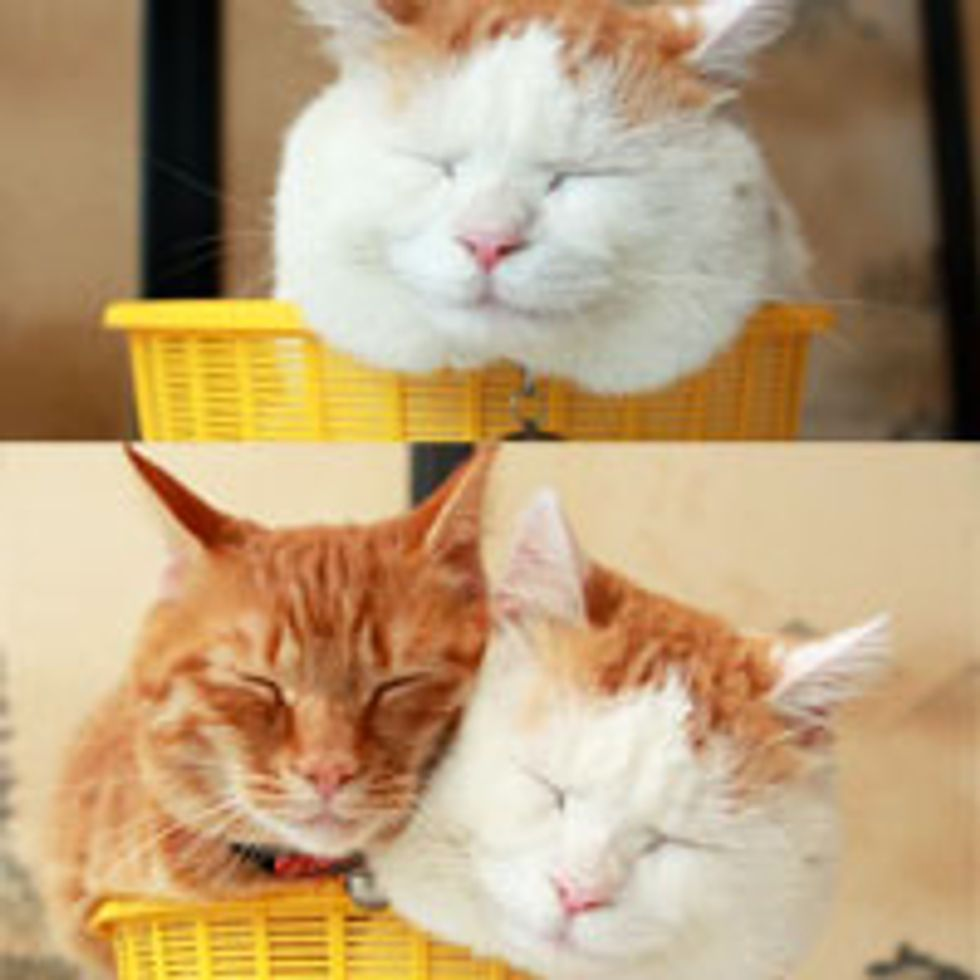 One Kitty in a Basket is Content, Two Kitties in a Basket is Love