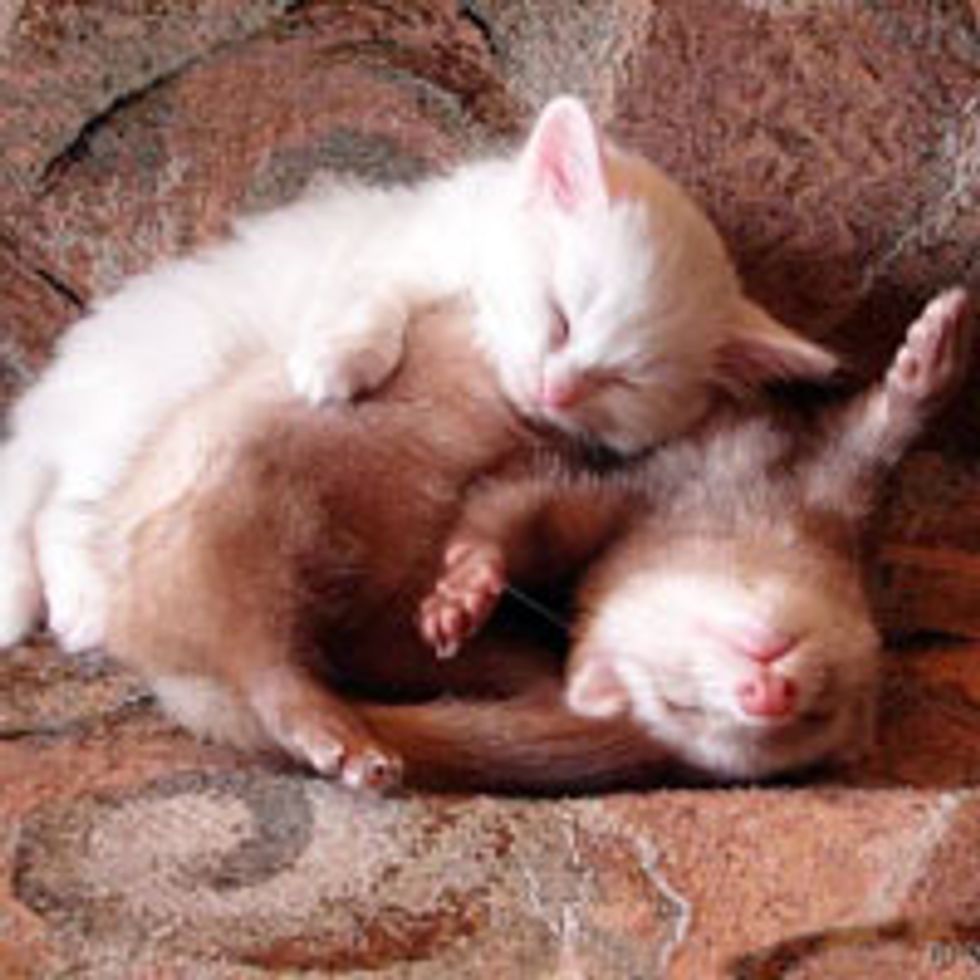 Cute Kitty and Her Squishy Ferret