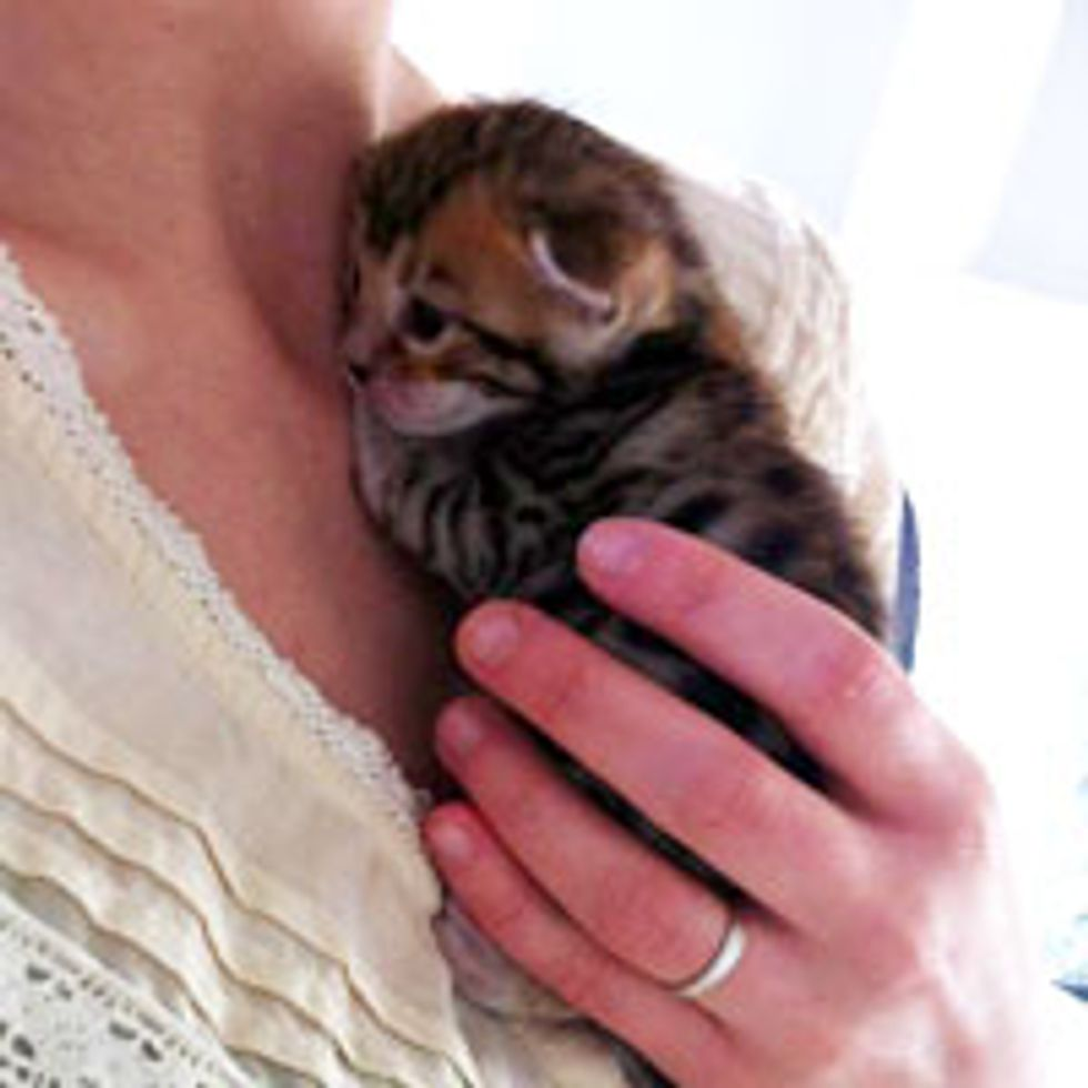 Tiny Clingy Kitten Just Learned to See