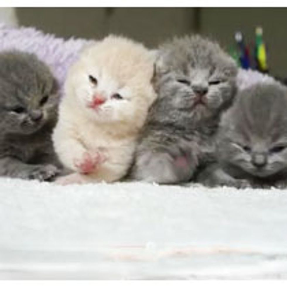 Tiny Kitties Squeak and Squirm into Your Heart
