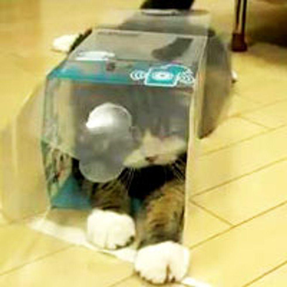 Maru and His Transparent Box