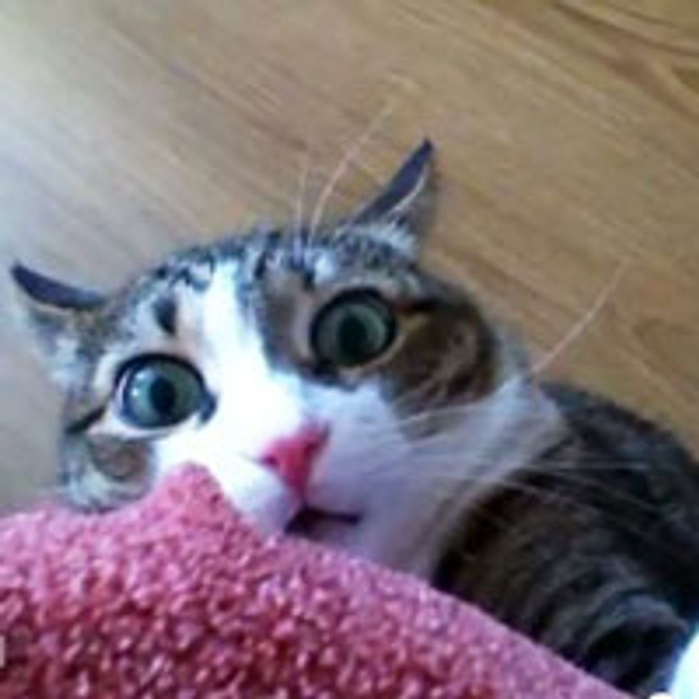 Hidey Kitty Gets Caught