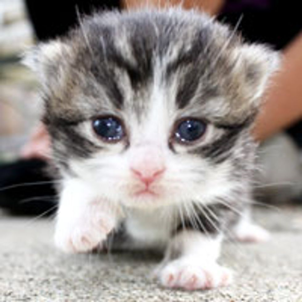 Tiny Kitty Takes First Steps