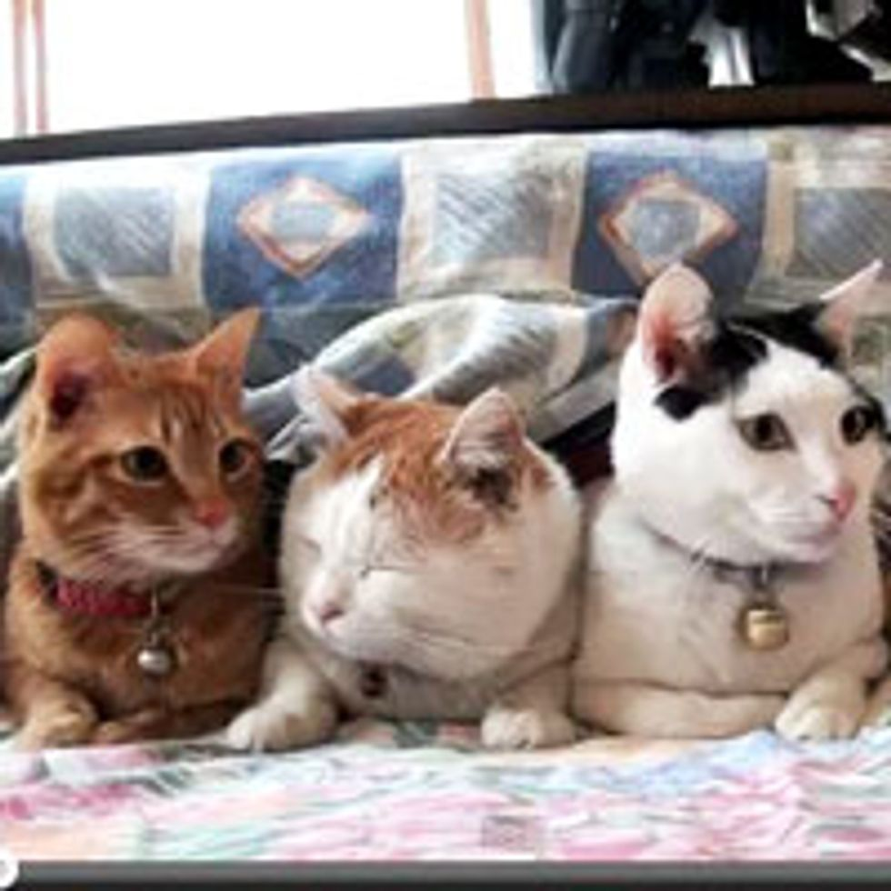 Kitty in the Center Not So Impressed