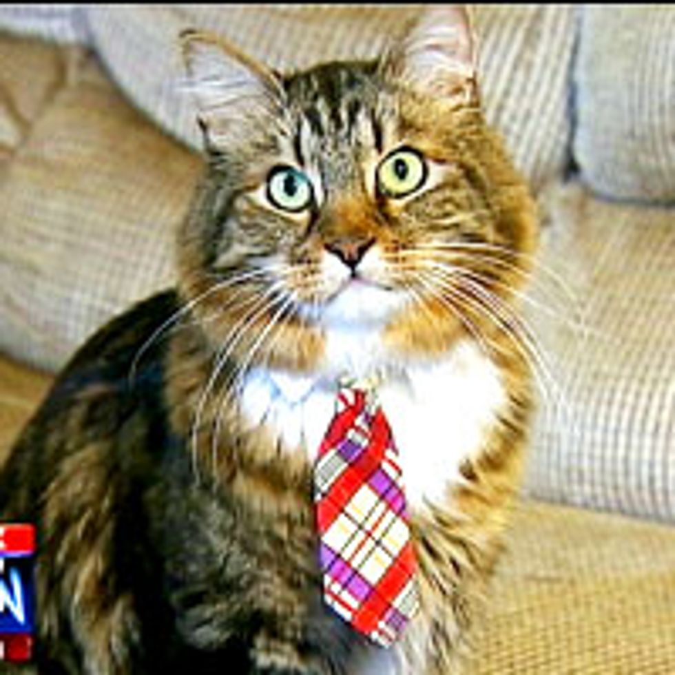 Hank the Cat for US Senate in Virginia