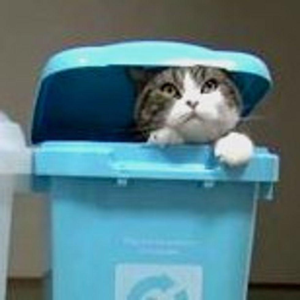 Maru's Recycling Bins