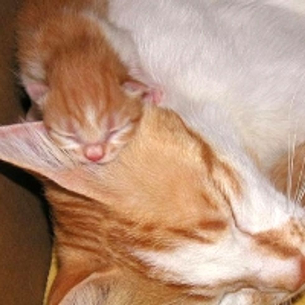 A Cat Mama's Love