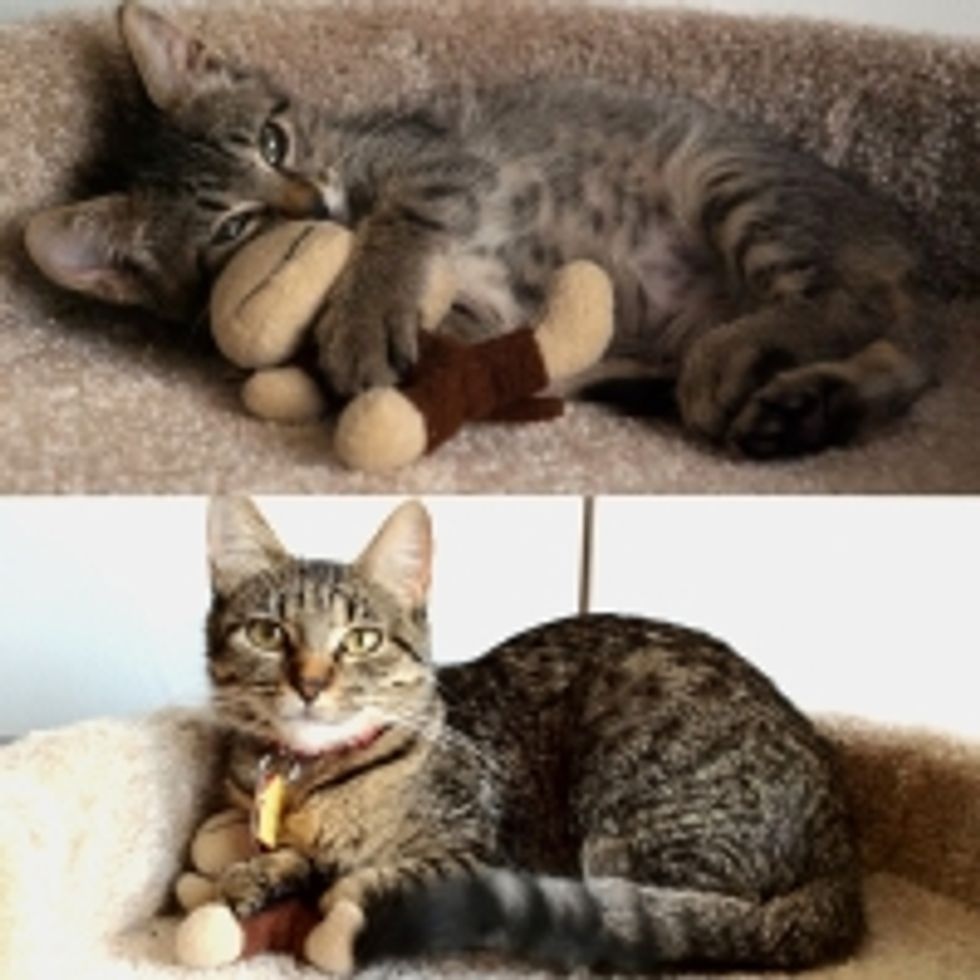 Kitty's Squishy Monkey Friend, Then and Now