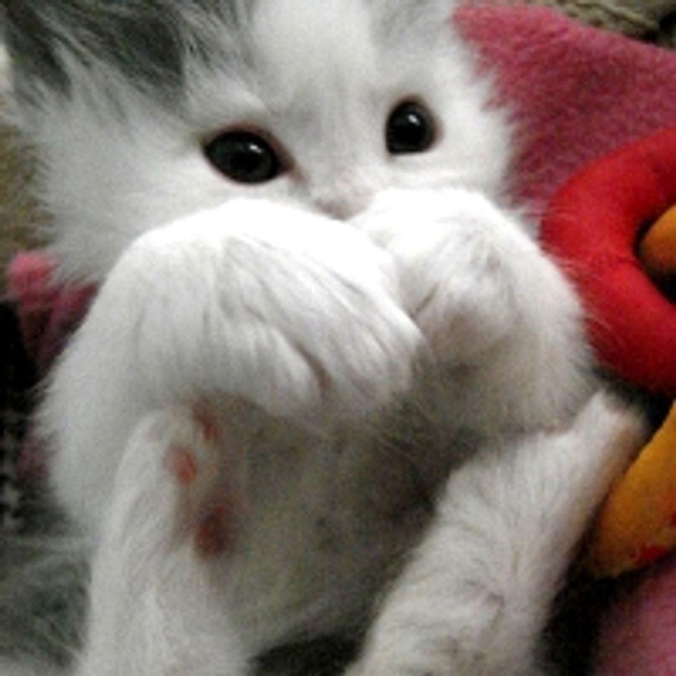 I am Hidden Behind My Mittens