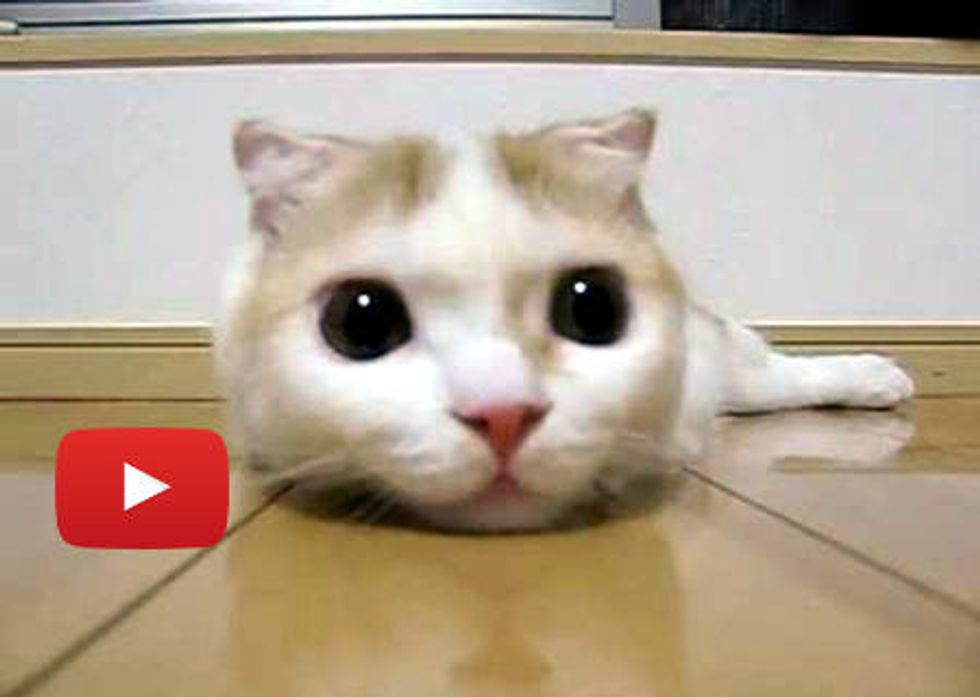 Kitty with Eyes that Hypnotize