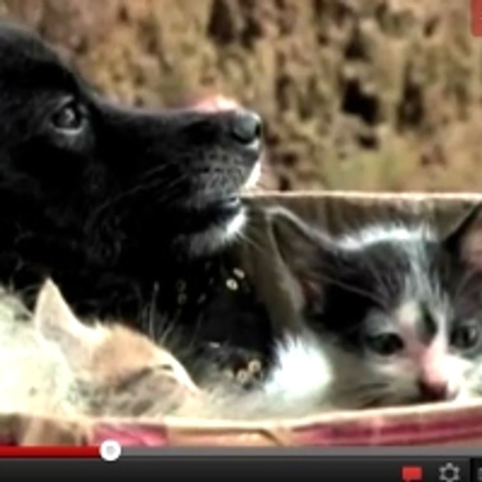 Dog Adopts Abandoned Kittens