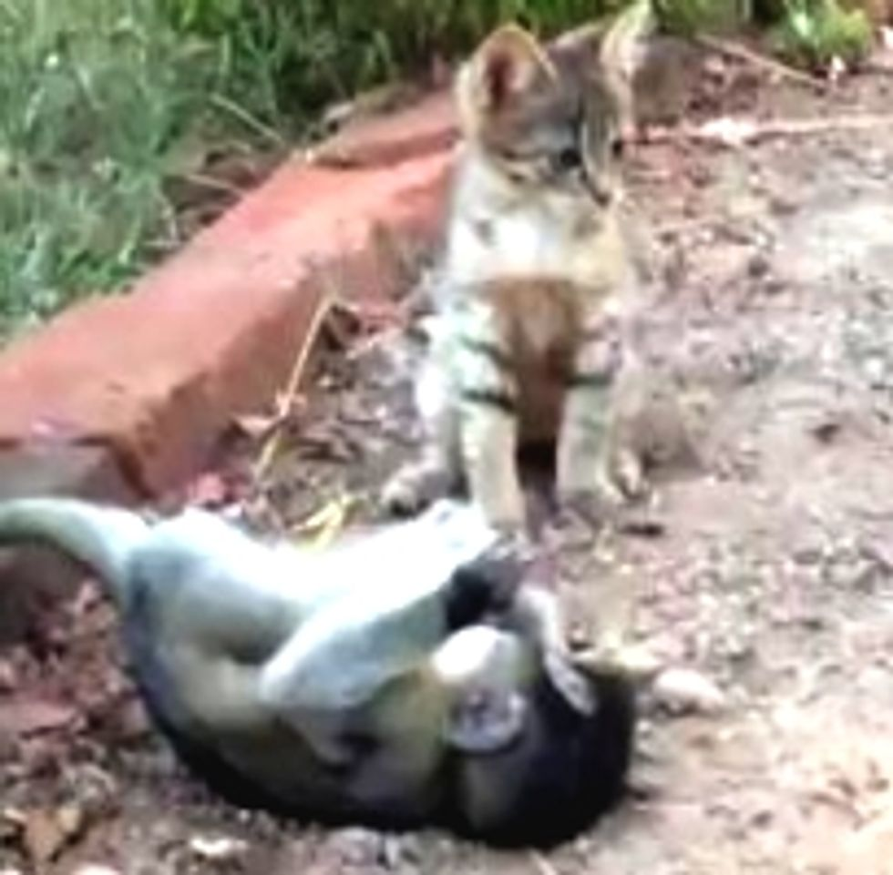 Kitty Plays with Rescue Baby Monkey
