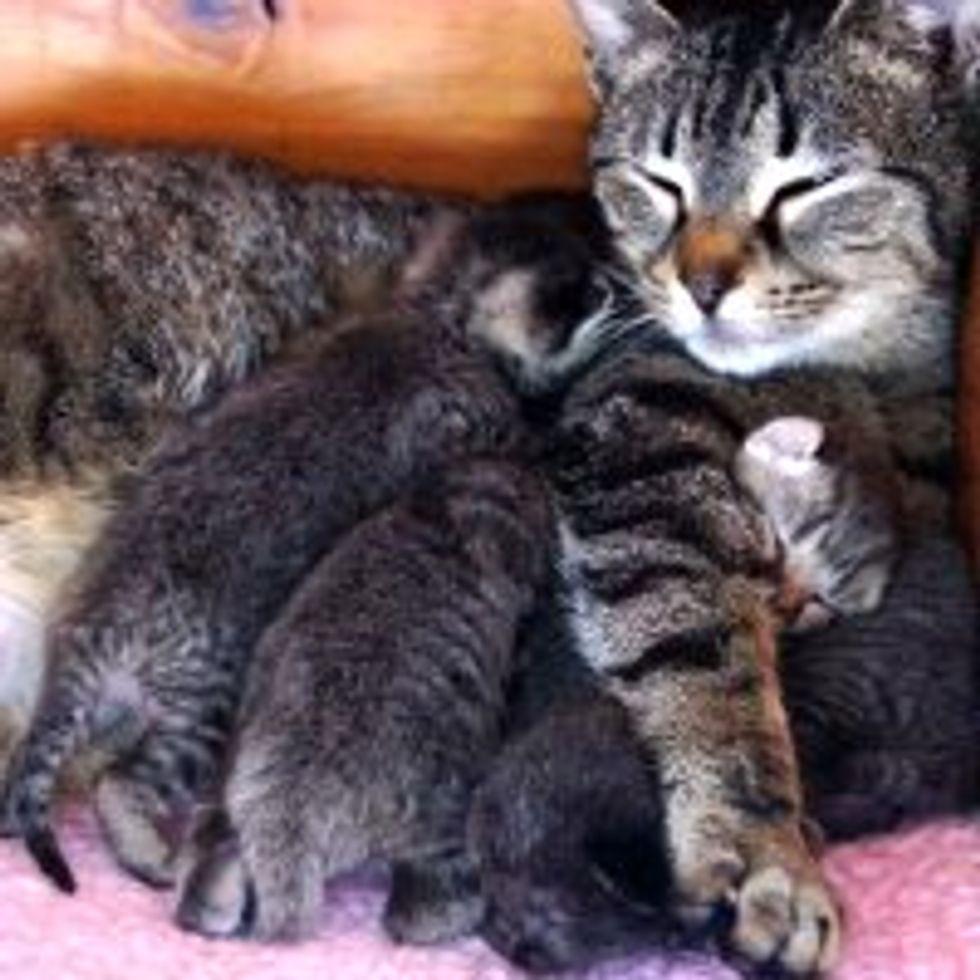 Rescue Cat Mama Plus 4
