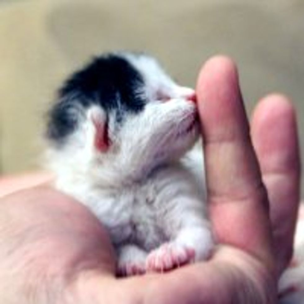 Sweet Little Kiss from a Tiny Rescue