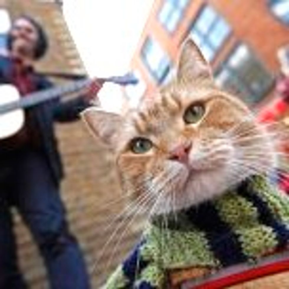 Bob the Street Cat Adopts Musician and Finds Everlasting Friendship