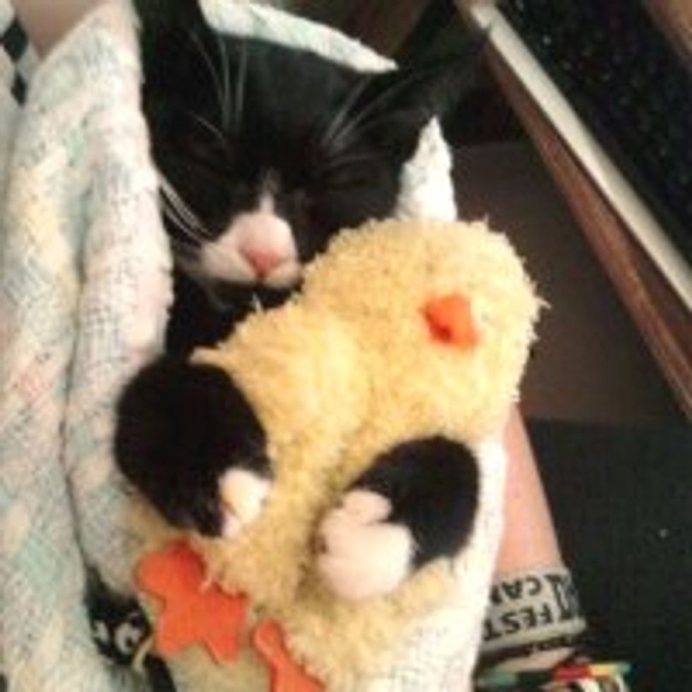Kitty Never Sleeps without Her Little Quack