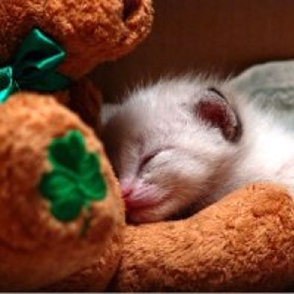 What Kitty Does on St. Patrick's Day
