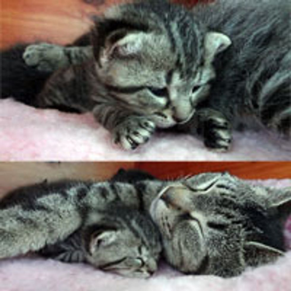 Cat Mama Soothes Kitten from a Bad Dream