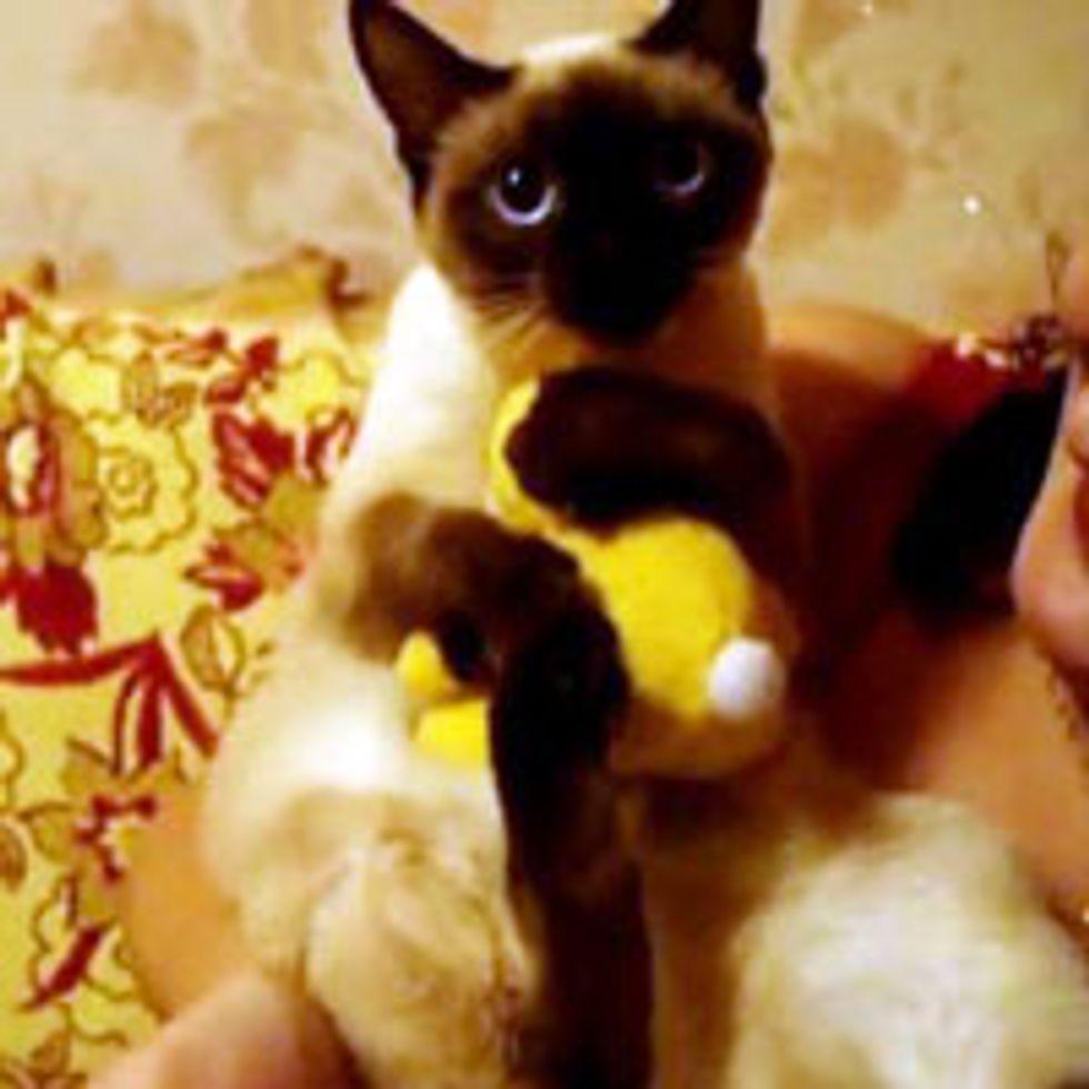 It's My Bunny Toy!