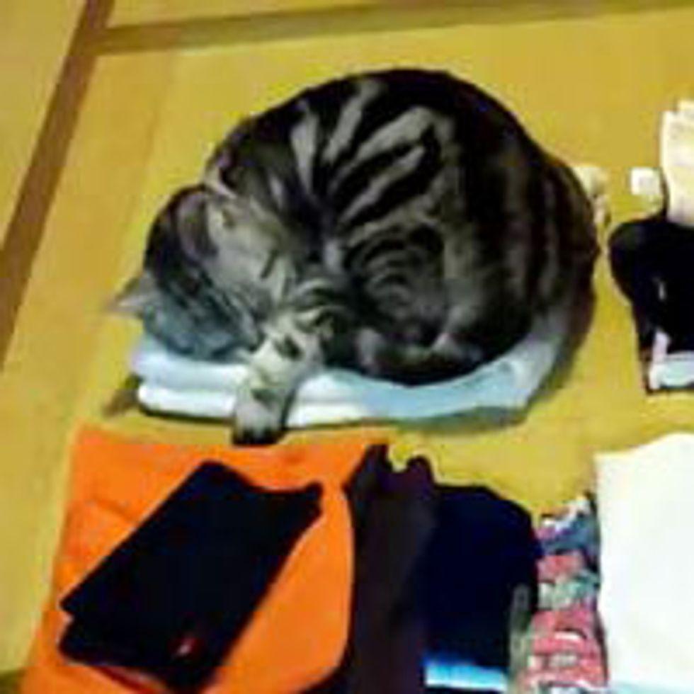 Cat Never Settles for One Nap Spot