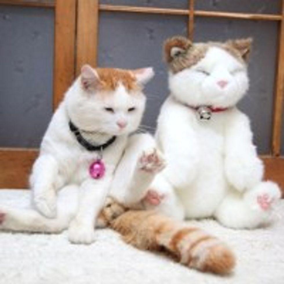 Shiro Kitty's Impostor