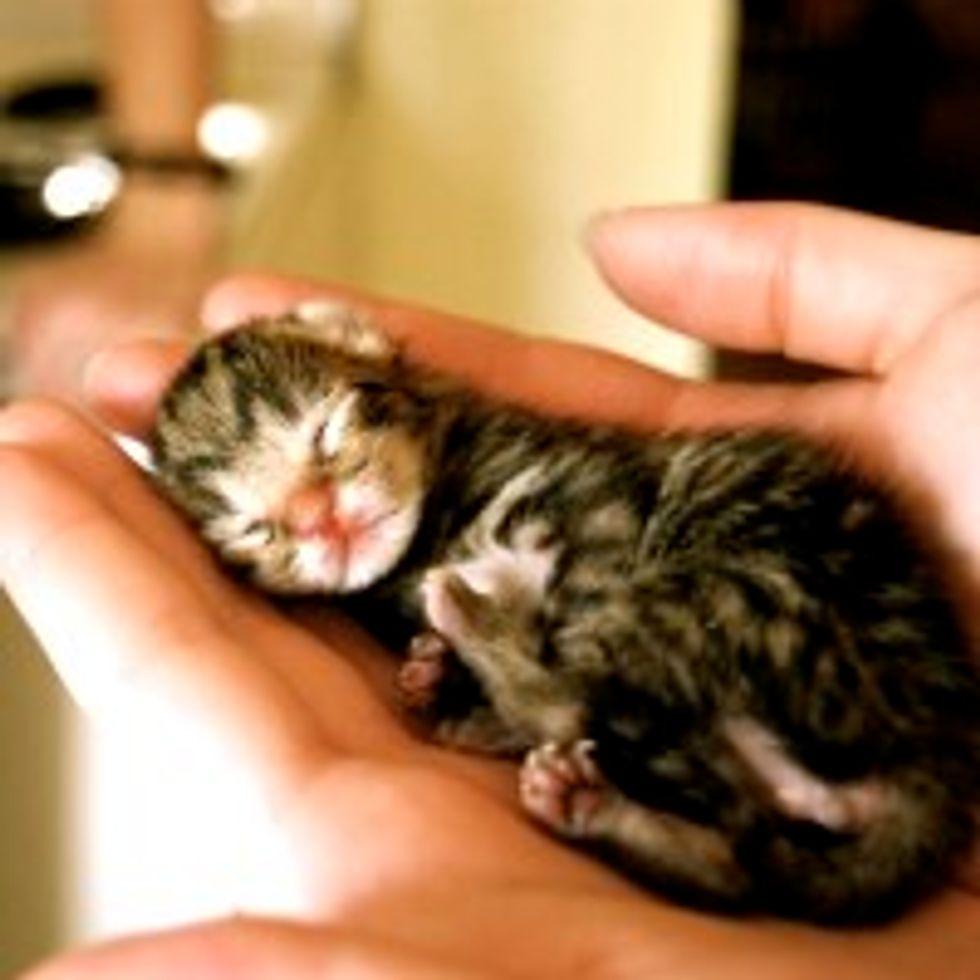 Tiny Furry Dreamer