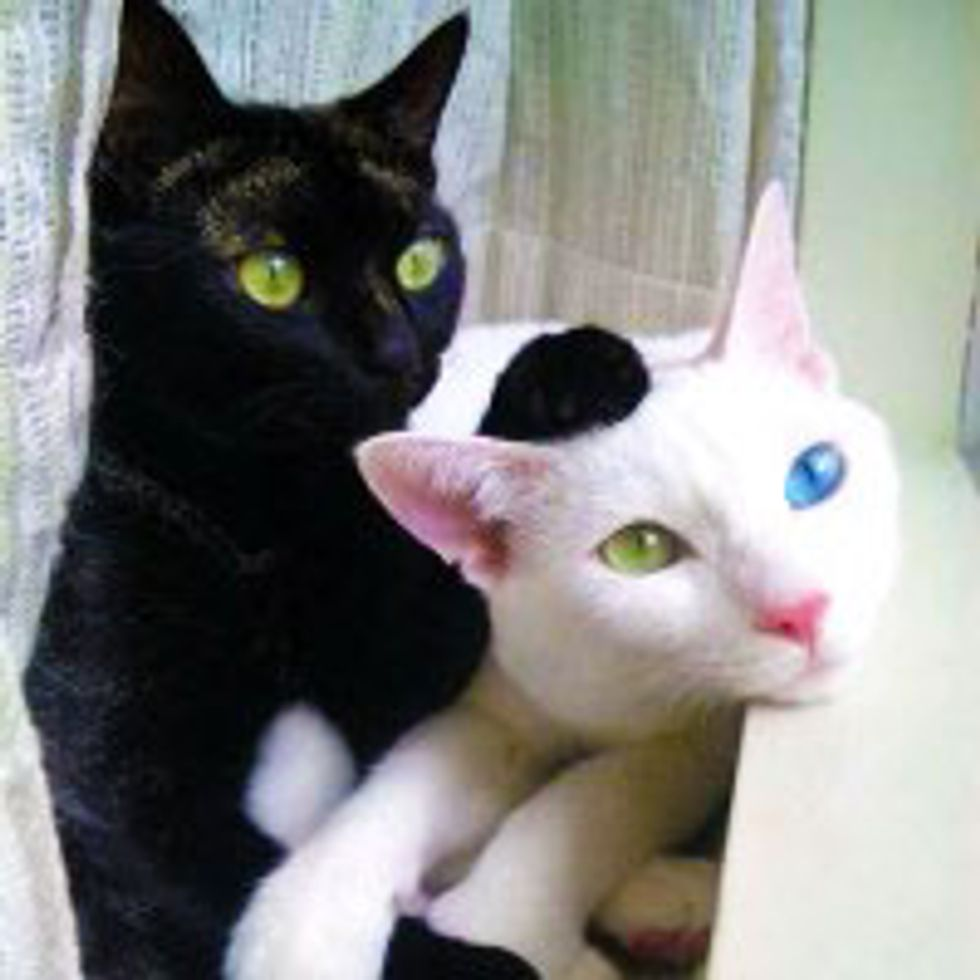 Milk and Cocoa, the Purrfect Match