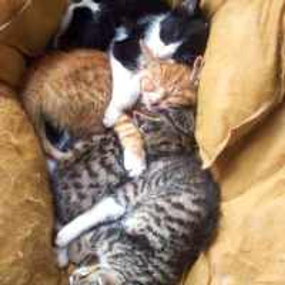 Cuddle Puddle Slumber Party