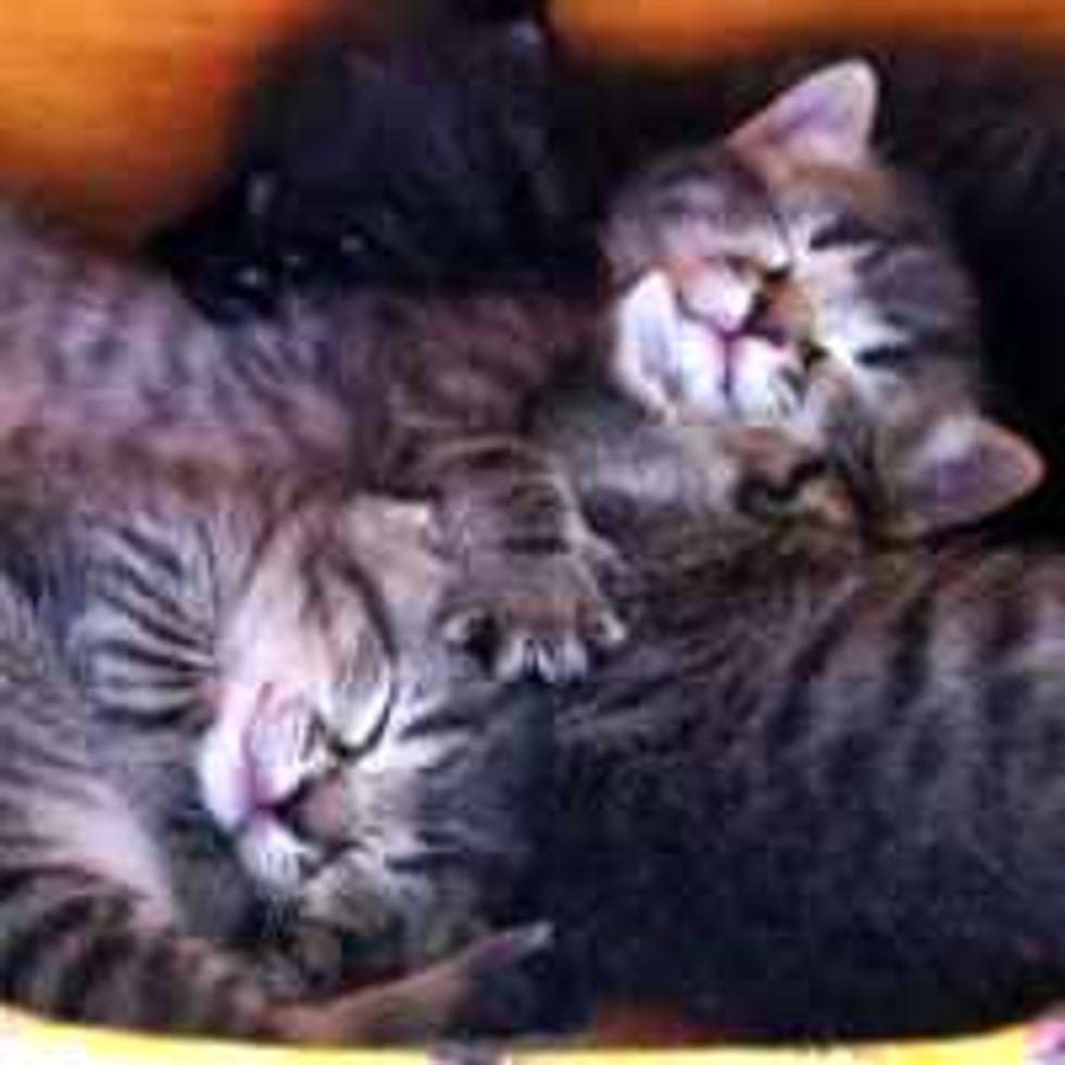 Tabby Kitty's Hug for Two