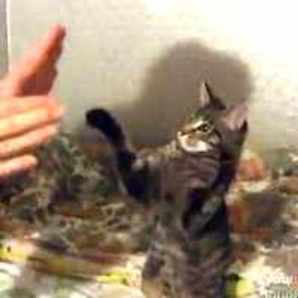 Playful Patty-Cake Kitty